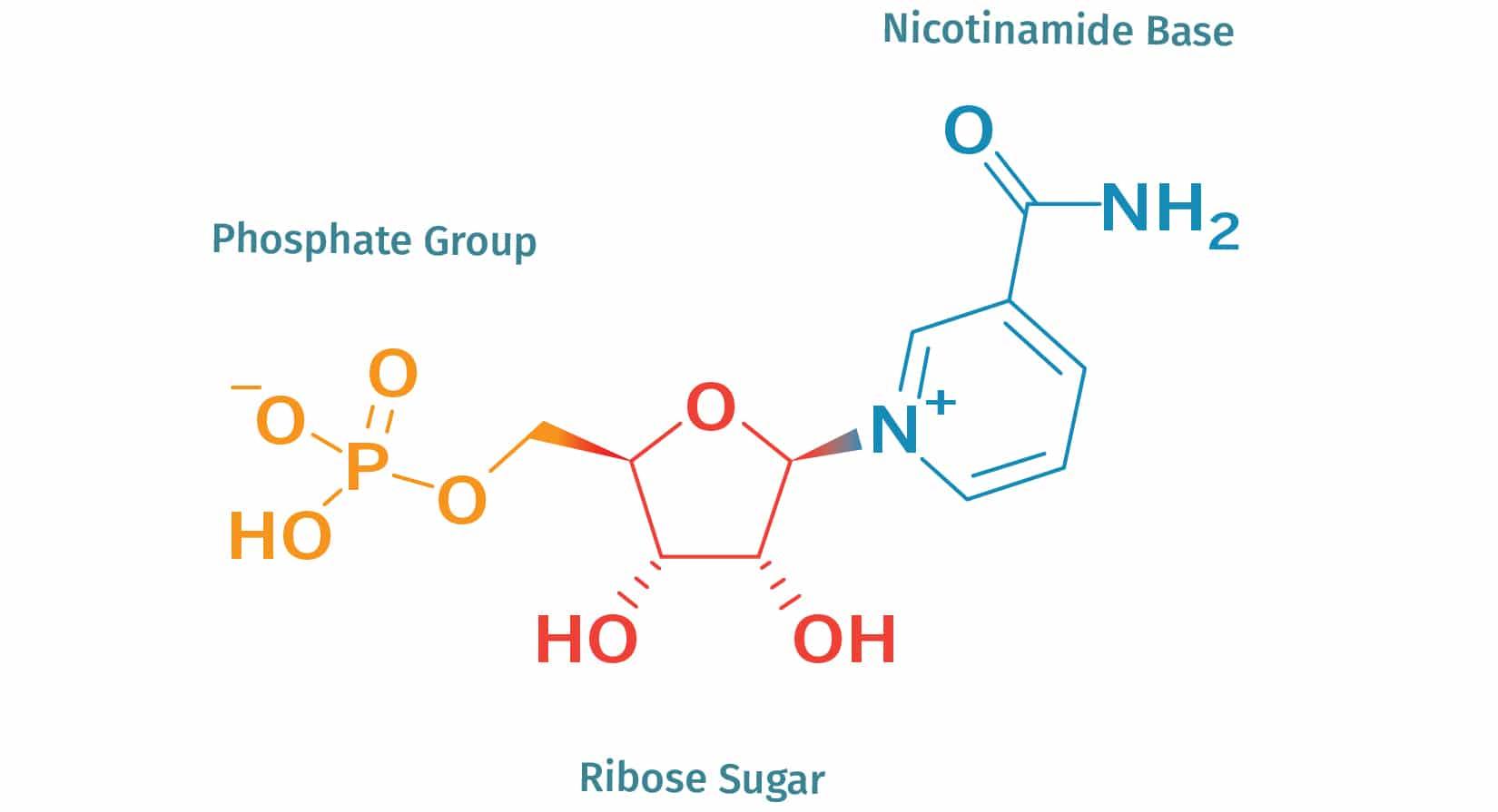 nicotinamide mononucleotide supplement